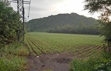 ขายด่วน ที่ดินแปลงสวยติดถนนใหญ่ เนื้อที่ทั้งหมด 75 ไร่