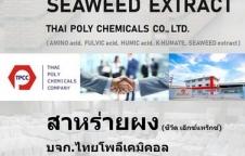 สาหร่ายผง ผงสาหร่าย Seaweed extract powder สาหร่ายสกัด