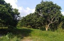 ขายที่ดินสวนผลไม้ จันทบุรี ขนาด 37 ไร่ น้ำไฟพร้อม