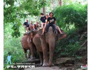 Maevang Elephant Training Camp Chiang Mai Thailand.
