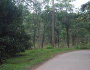 ขายสวนยางพารายางปลูกใหม่  ต.โมคลาน อ.ท่าศาลา จ.นครศรีธรรมราช  0811733439