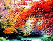 ทัวร์ญี่ปุ่น ฤดูไหนดี