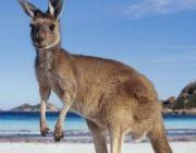 ทัวร์ออสเตรเลีย สถานที่ท่องเที่ยวยอดฮิต