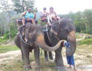 โปรโมชั่นพิเศษ ทัวร์ภูเก็ต ทัวร์ซาฟารี + ขี่ช้าง Phuket Vacation เพียง 1300 บาท