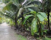ขายที่ดินสวนผลไม้ ทำเลดีติดถนนเดินทางสะดวก พื้นที่ 1 ไร่ ราคา 1.2 ล้านบาท