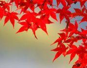 ทัวร์ญีปุ่่นราคาถูก 2557 2014 ใบไม้เปลี่ยนสีกันยายน - ตุลาคม เริ่มต้น 27900