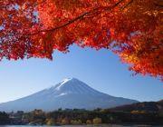ทัวร์ญี่ปุ่นตุลาคม 2557 2014 ใบไม้เปลี่ยนสี โตเกียวฟูจิ เริ่มต้น 27900