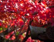 ทัวร์ญี่ปุ่นตุลาคม 2557 2014 ใบไม้เปลี่ยนสี โตเกียว โอซาก้า เริ่มต้น 32900