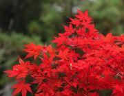 ทัวร์ญี่ปุ่นวันปิยะตุลาคม 2557 ใบไม้เปลี่ยนสี โอซาก้าโตเกียว เริ่มต้น 38900