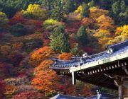 ทัวร์ญี่ปุ่นวันปิยะ 21-26 22-27 ตุลาคม 2557 ทัวร์โตเกียว ภูเขาไฟฟูจิ 34900