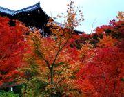 ทัวร์ญี่ปุ่นวันปิยะ 20-25 22-27 ตุลาคม 2557 ทัวร์โอซาก้าโตเกียว 6 วัน 5 คืน