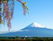 ทัวร์ญี่ปุ่นบินเช้า สิงหาคม 2557 ทัวร์โตเกียวฟูจิ เกียวโตโอซาก้า 6 วัน
