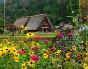 ทัวร์ญี่ปุ่นวันแม่ 8-13 สิงหาคม 2557 ทาคายาม่า ชิราคาวาโกะ โตเกียว 6 วัน