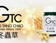 +++ GTC Gold Tang Chao อาหารเสริมถั่งเช่าสีทองแท้ 100% จากทิเบต