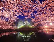 PARADISE TOKYO 5D 3N BY JL