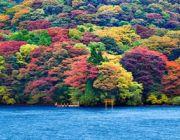 โตเกียว-ฟูจิ-ฮาโกเน่-สกี รีสอร์ท 5วัน 3คืน
