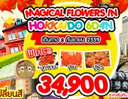 MAGICAL FLOWER IN HOKKAIDO 6DAYS 4NIGHTS