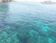 ทัวร์เกาะห้อง ทะเลใน เกาะผักเบี้ย เกาะไร่ เกาะลาดิง โดยเรือเร็ว จากกระบี่