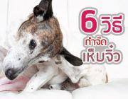 6 วิธีกำจัด เห็บ จิ๋วตัวร้ายในสุนัข