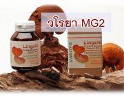 วโรยา สปอร์เห็ดหลินจือ MG2 Organic 100%