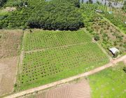 ขายที่สวนยางพารา มะม่วง ลำไร รวม 14 ไร่ อ.ฝาง จ.เชียงใหม่